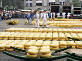 Cheese Market  Alkmaar  Holland