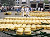 Cheese Market  Alkmaar  Holland