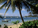 Reduit Beach  Rodney Bay  St Lucia  Windward Islands  West Indies  Caribbean  Central America