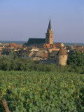Bergheim and Vineyards  Alsace  France