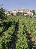 Vineyard  Cote Du Rhone  Sablet  Vaucluse  Provence  France