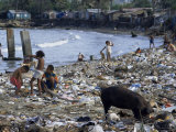 Children and Pigs Foraging on Rubbish Strewn Beach  Dominican Republic  Central America