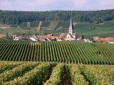 Chamery  Montagne De Reims  Champagne  France