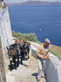 Animal Transport  Santorini (Thira)  Cyclades Islands  Greek Islands  Greece
