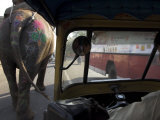 Elephant and Bus on the Road Seen from a Motor Rickshaw  Jaipur  Rajasthan State  India