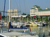 Boat Harbour  Cairns  Queensland  Australia