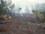Clearing Forest for Building of the Forest Edge Highway in High Jungle Region of Tarapoto  Peru