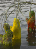 Three Women Pilgrims in Saris Making Puja Celebration in the Pichola Lake at Sunset  Udaipur  India