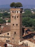 Tour Des Guinigi  Lucca  Tuscany  Italy