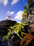 Cacti and Windmill at Jardin De Los Cactus  Lanzarote  Spain