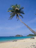Palm Tree at Praia Do Conceicao Beach  Fernando De Noronha  Brazil