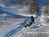 Dog Sleigh  Province of Quebec  Canada