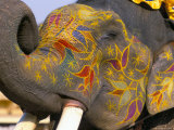 Painted Elephant  Pushkar  Rajasthan State  India
