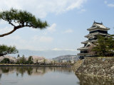 Pine Tree  Matsumoto Castle  Matsumoto City  Nagano Prefecture  Honshu Island  Japan