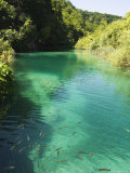 Small Fish in Turquoise Lake  Plitvice Lakes National Park  Unesco World Heritage Site  Croatia