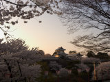 Sunset  Cherry Blossom  Kanazawa Castle  Kanazawa City  Ishigawa Prefecture  Honshu Island  Japan