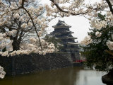 Cherry Blossoms  Matsumoto Castle  Matsumoto City  Nagano Prefecture  Honshu Island  Japan
