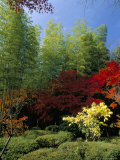 Autumn Maples  Tenryu-Ji (Temple)  Arashiyama  Kyoto  Japan