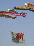 Koi Nobori  Otako Age Giant Kite Flying Festival  Sagamihara  Kanagawa Prefecture  Japan