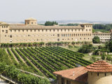 Vineyard and Monastery  Olite  Navarra  Euskadi  Spain