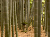 Stone Lantern  Bamboo Forest  Kamakura City  Kanagawa Prefecture  Honshu Island  Japan