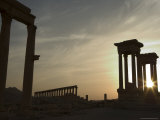 Sunset  Archaelogical Ruins  Palmyra  Unesco World Heritage Site  Syria  Middle East