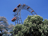 View of the Giant Prater Ferris Wheel Above Chestnut Trees in Bloom  Vienna  Austria