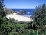 View Over Trees to Trbeach and Bushranger Bay  Mornington Peninsula  Victoria  Australia