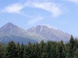 Mountain Pines  Vysoke Tatry Mountains  Vysoke Tatry  Slovakia