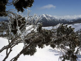 Winter Landscape of Mountains Seen Through Snow-Covered Tree Branches  High Country  Australia