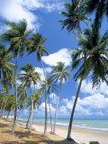 Cabo De Sao Roque  Natal  Rio Grande Do Norte State  Brazil  South America