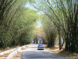 Bamboo Avenue  St Elizabeth  Jamaica  West Indies  Central America