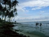 Stilt Fishermen Fishing from Their Poles Between Unawatuna and Weligama  Sri Lanka