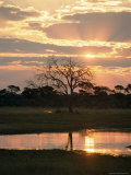 Sunset and Waterhole  Hwange National Park  Zimbabwe  Africa