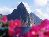 Pitons Volcanic Mountains  with Bougainvillea Flowers in Foreground  St Lucia  West Indies