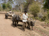 Bullock Carts  Tala  Bandhavgarh National Park  Madhya Pradesh  India
