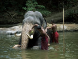 Two Men Washing an Elephant in the River after a Working Day  Kandy Area  Sri Lanka
