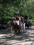 Horse Drawn Carriage in Central Park  Manhattan  New York  New York State  USA
