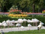 Wilhelma Zoo and Botanical Gardens  Stuttgart  Baden Wurttemberg  Germany