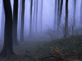 Forest in the Fog  Bielefeld  Germany