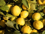 Close-Up of Lemons in the Market  Menton  Provence  Cote d&#39;Azur  France