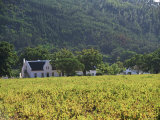 House in the Wine Growing Area of Franschhoek  Cape Province  South Africa  Africa