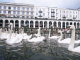Swans in Front of the Alster Arcades in the Altstadt (Old Town)  Hamburg  Germany