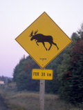 Sign  Moose Crossing the Road  Algonquin Provincial Park  Ontario  Canada