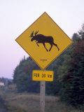 Sign  Moose Crossing the Road  Algonquin Provincial Park  Ontario  Canada
