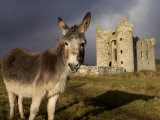 A Donkey Grazes in Front 17th Century Monea Castle  County Fermanagh  Ulster  Northern Ireland