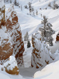 Snow  Trees  and Hoodoos  Bryce Canyon National Park  Utah  USA