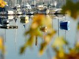 Reflection of Boats in Quartermaster Marina  Vashon Island  Washington State  USA