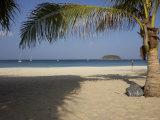 Palm Tree in Front  Kata Beach  Phuket  Thailand  Southeast Asia