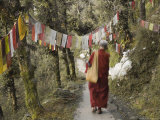 Buddhist Monk Walking Down Path  Mcleod Ganj  Dharamsala  Himachal Pradesh State  India